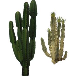 PNG Kaktus - 51754