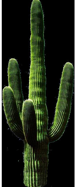 PNG Kaktus - 51746