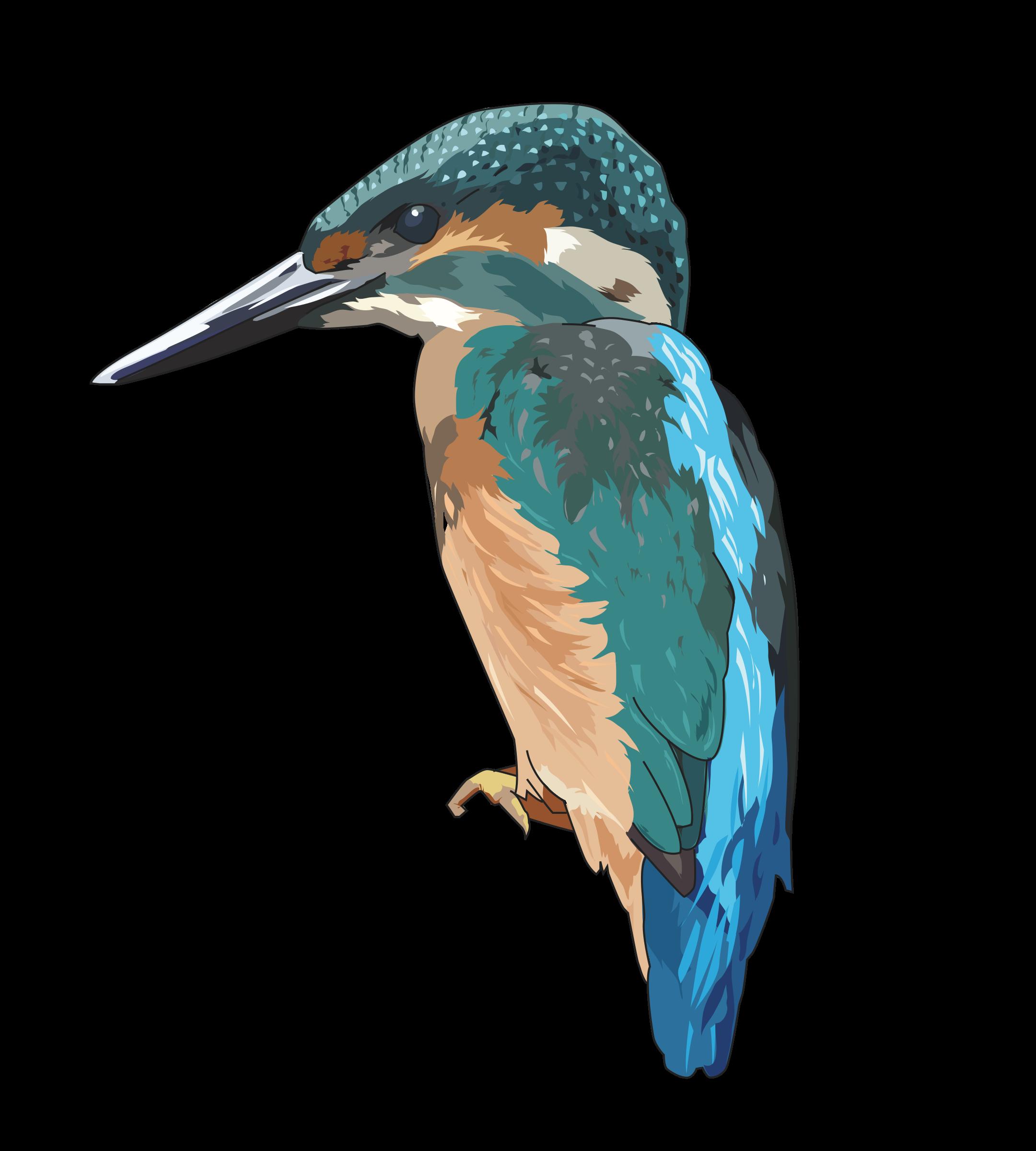 PNG Kingfisher Bird - 88332