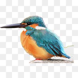 PNG Kingfisher Bird - 88339