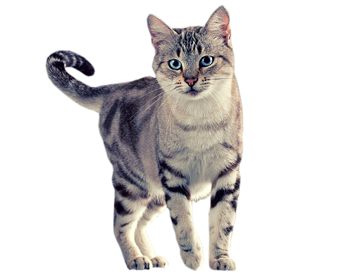 PNG Kot