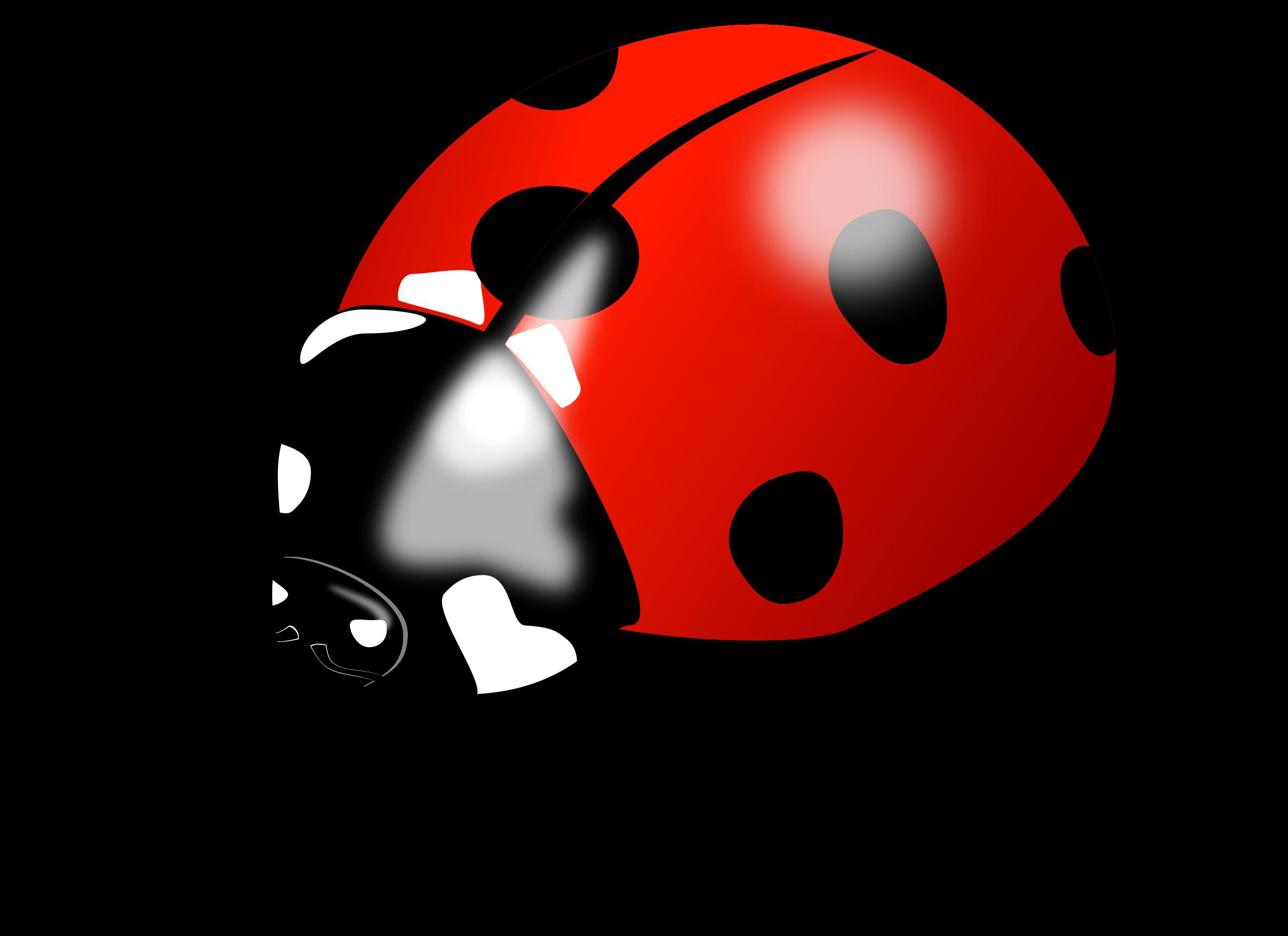 BIG IMAGE (PNG) - PNG Ladybird