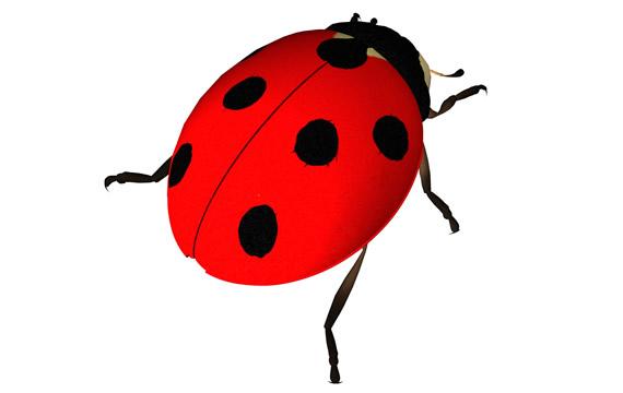 Ladybird Png Stuff - PNG Ladybird