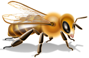 Sebagaimana kita ketahui propolis adalah produk dari lebah yang sangat  membantu mencegah penyakit bahkan membantu mengatasi berbagai keluhan  kesehatan. - PNG Lebah