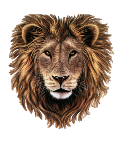 PNG Lion Head Roaring - 61515