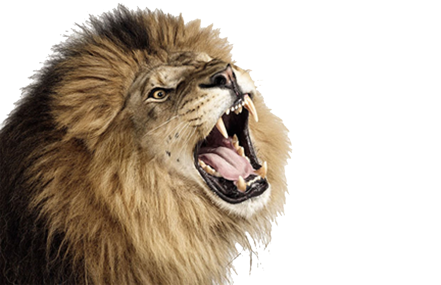 PNG Lion Head Roaring - 61517