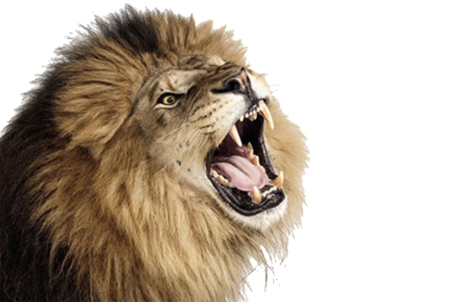 Lion PNG - PNG Lion Head Roaring