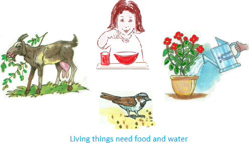PNG Living Things - 68933