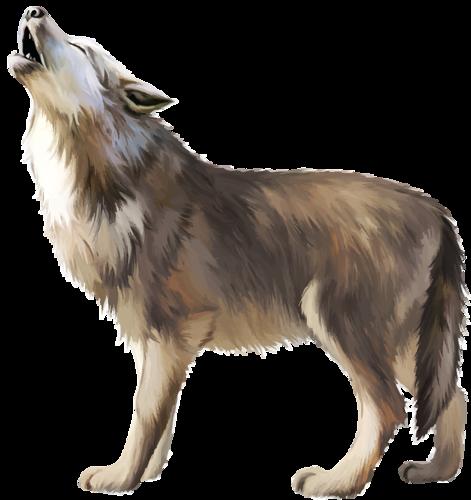 wolf PNG4604: 0 b9100 25b93c05 L - PNG Lobo