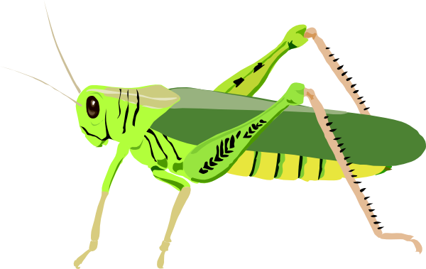 PNG: small · medium · large - PNG Locust
