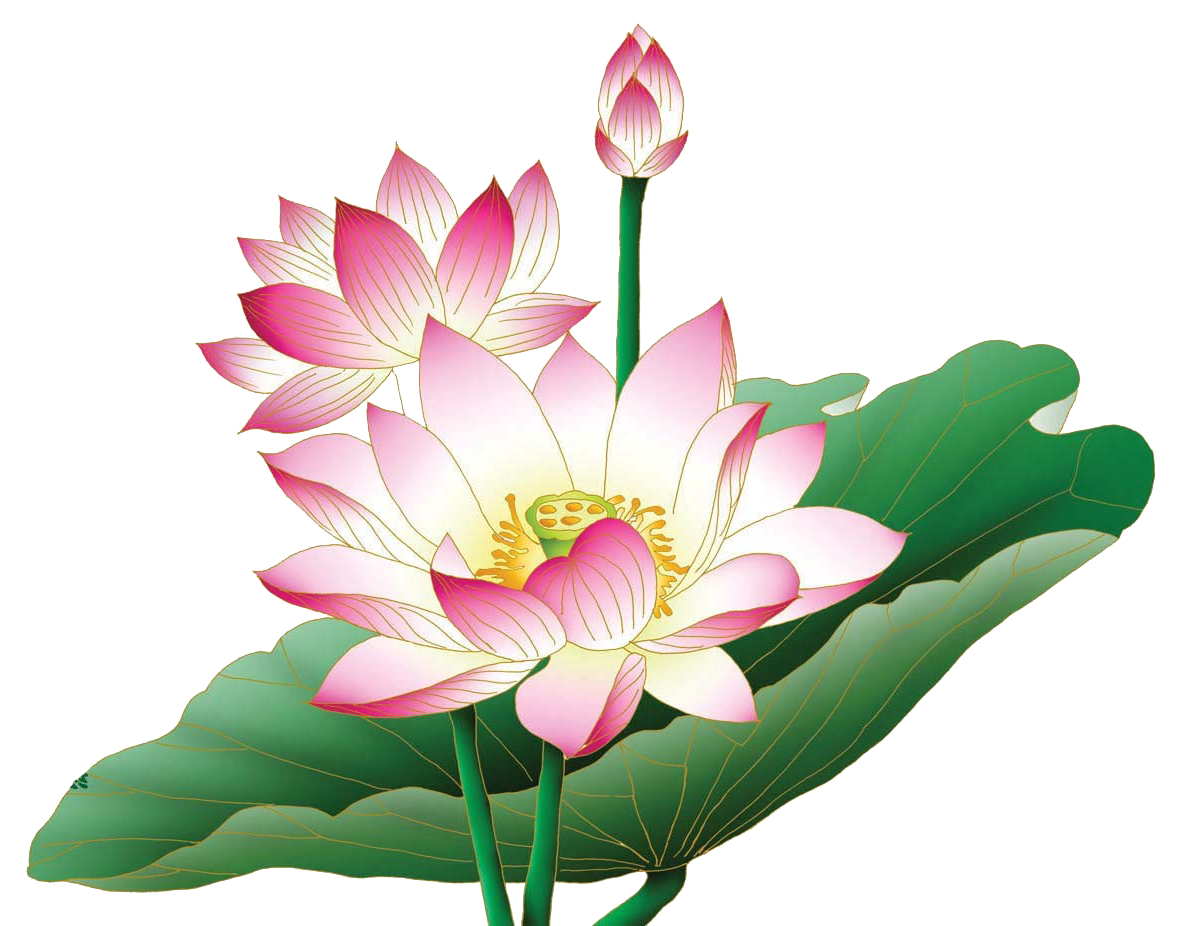 Png Lotus Flower Transparent Lotus Flowerpng Images Pluspng