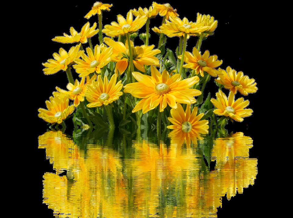 Kukat, Keltainen, Kukka, Luonto, Keltainen Kukka - PNG Luonto