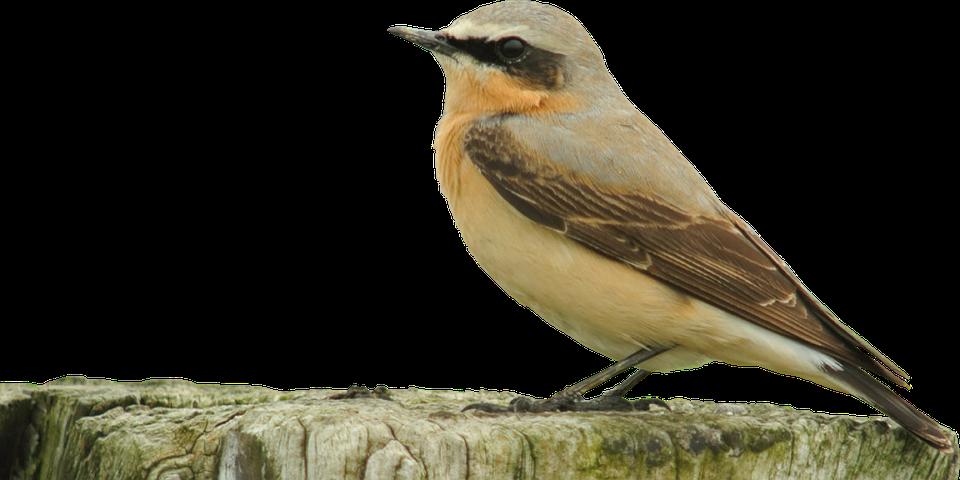 Laululintujen, Luonto, Metsä, Png, Tausta Läpinäkyvä - PNG Luonto