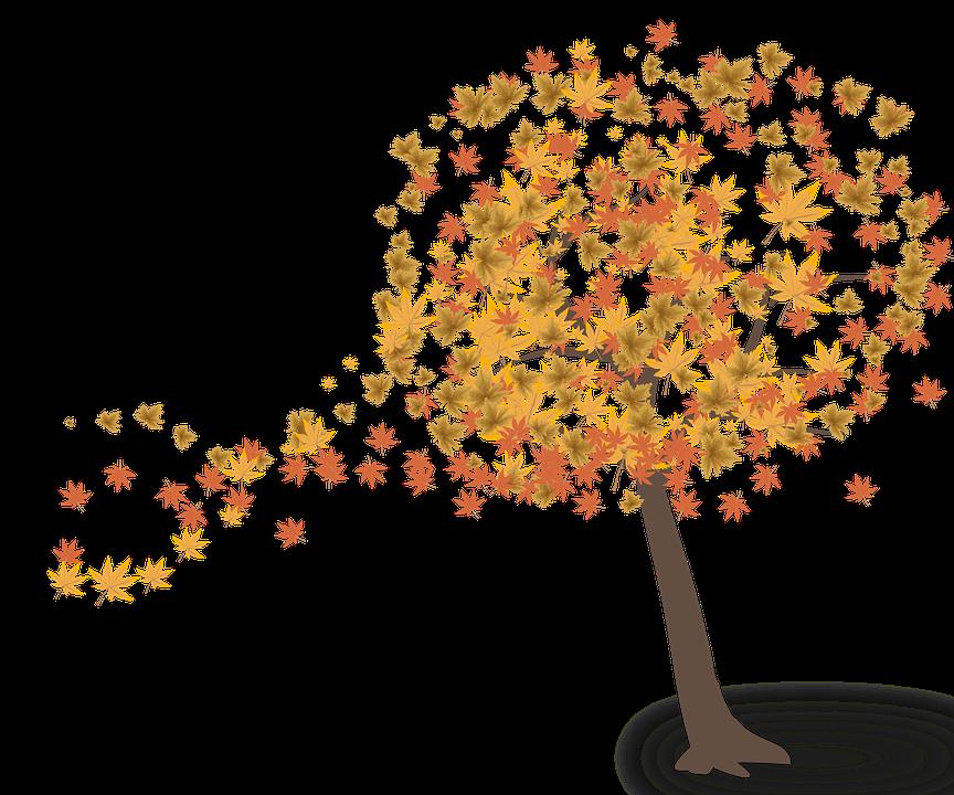 Puu, Lehdet, Syksy, Luonto, Lehtiä, Vihreä, Oksat - PNG Luonto