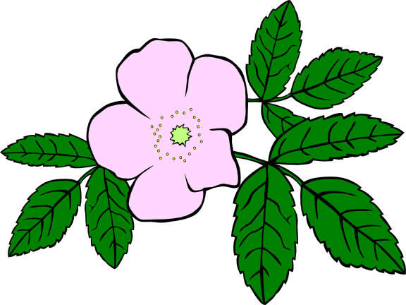 Tiedostonimi: Blomma2.png. Kuvan on tehnyt: OpenClipart. Koulu:  Utbildningsavdelningen Kuvan nimi: Blomma Kategoria: Koristeelliset osat  Luonto Vuodenajat - PNG Luonto