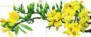 Hotline: 01663.5.42.42.6 - 09.3670.3671. Địa Chỉ: 84 Thanh Đa, Q.Bình  Thạnh, Tp.HCM Email: Info@vogodienthoaire Pluspng.com. Website:  Www.vogodienthoaire Pluspng.com. - PNG Mai