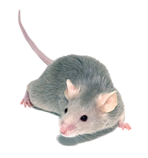 PNG Mice - 78637