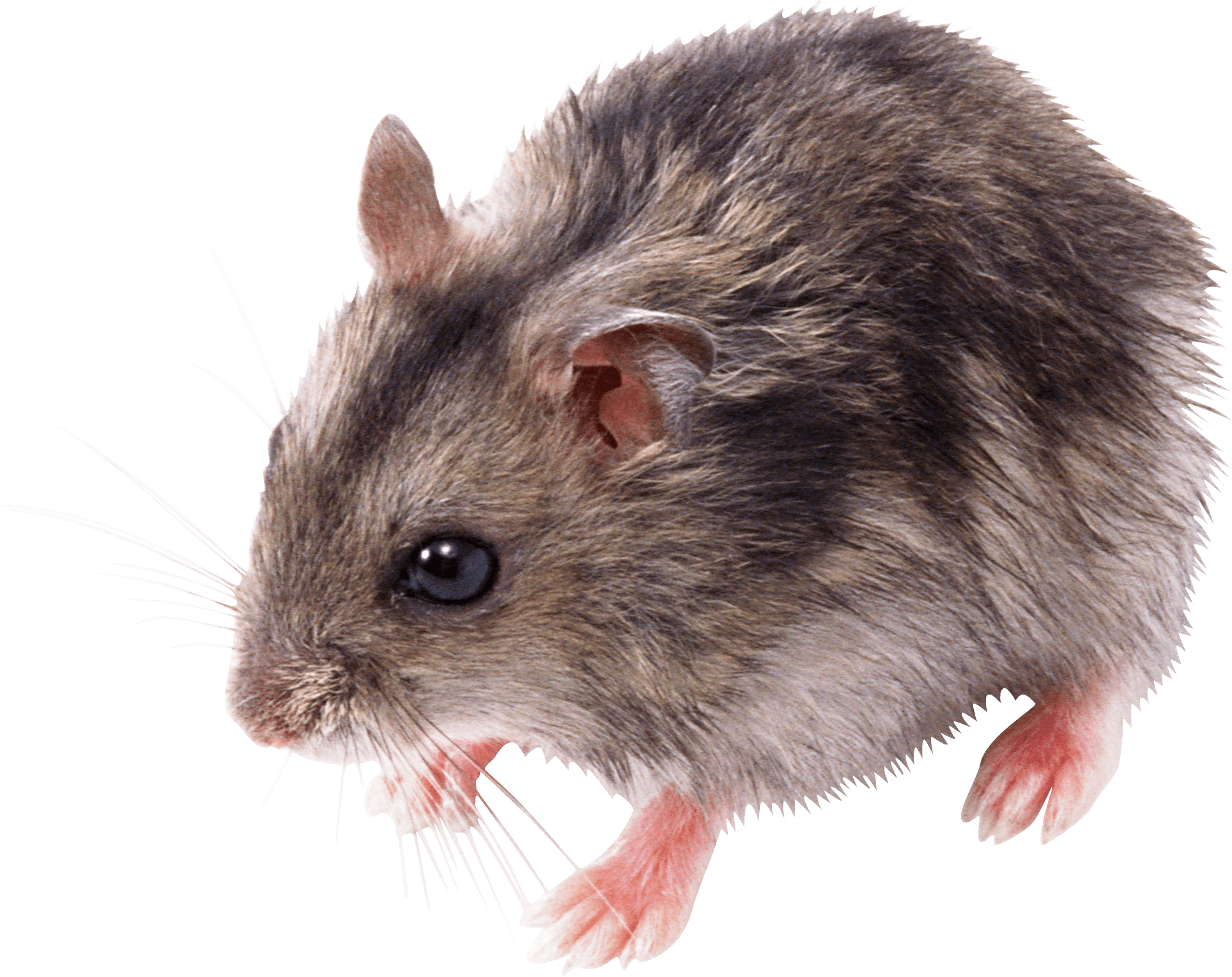 PNG Mice - 78630