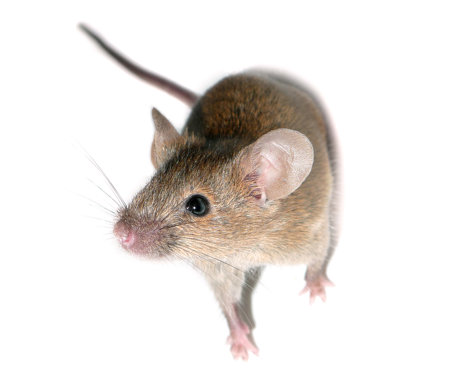 PNG Mice - 78635