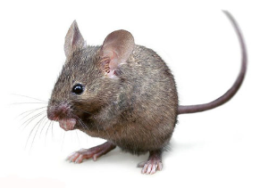PNG Mice - 78636