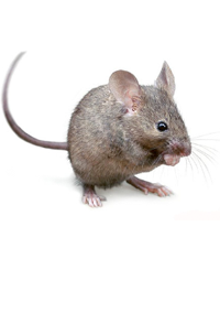 PNG Mice - 78631