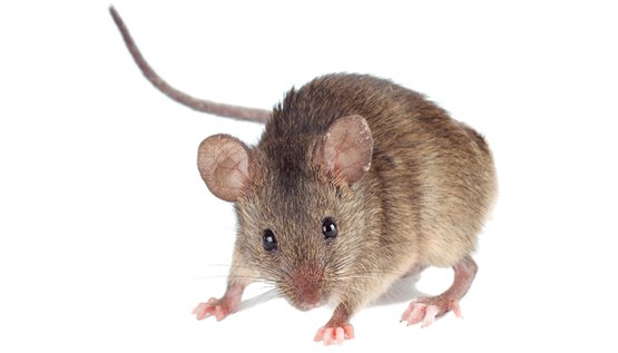 PNG Mice - 78633