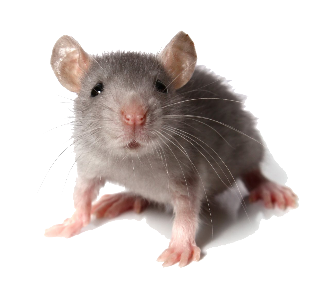 PNG Mice - 78628