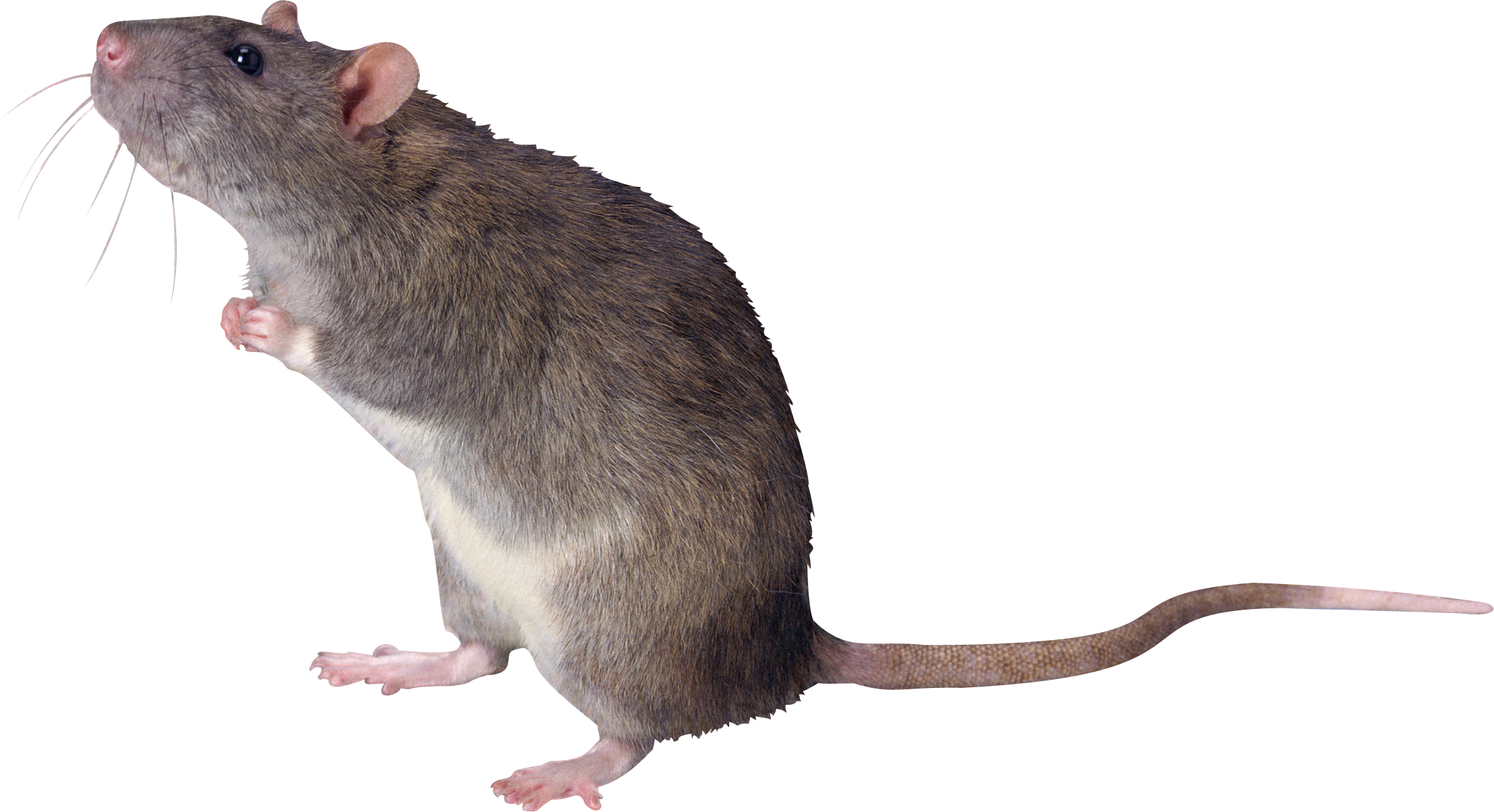 PNG Mice - 78627