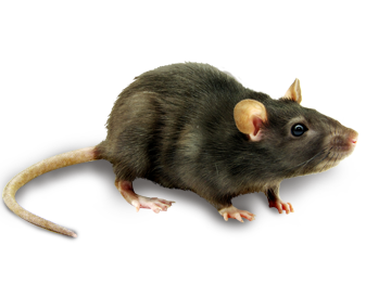 PNG Mice - 78639