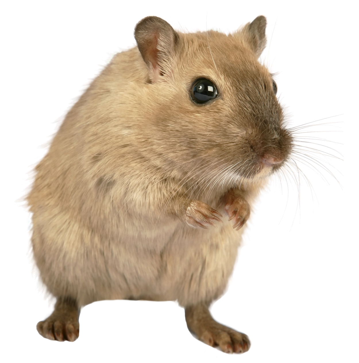 PNG Mice - 78641