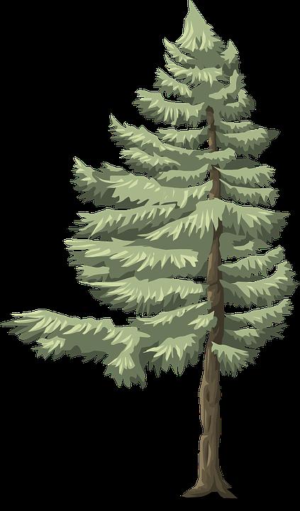 PNG Nadelbaum - 44620
