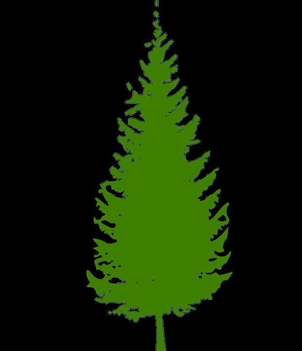 PNG Nadelbaum - 44617