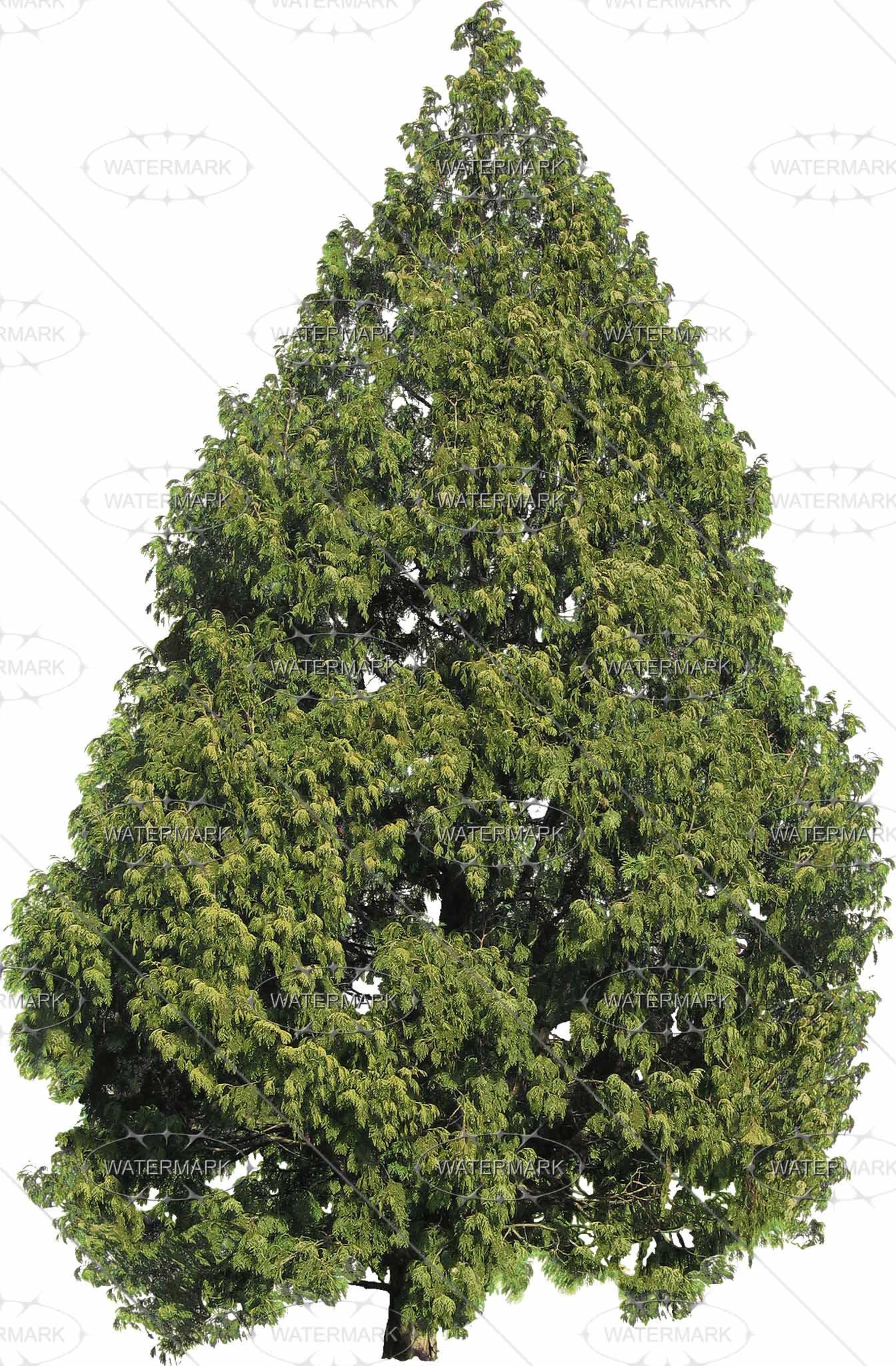 PNG Nadelbaum - 44615