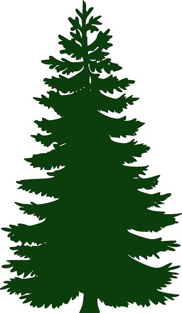 PNG Nadelbaum - 44621