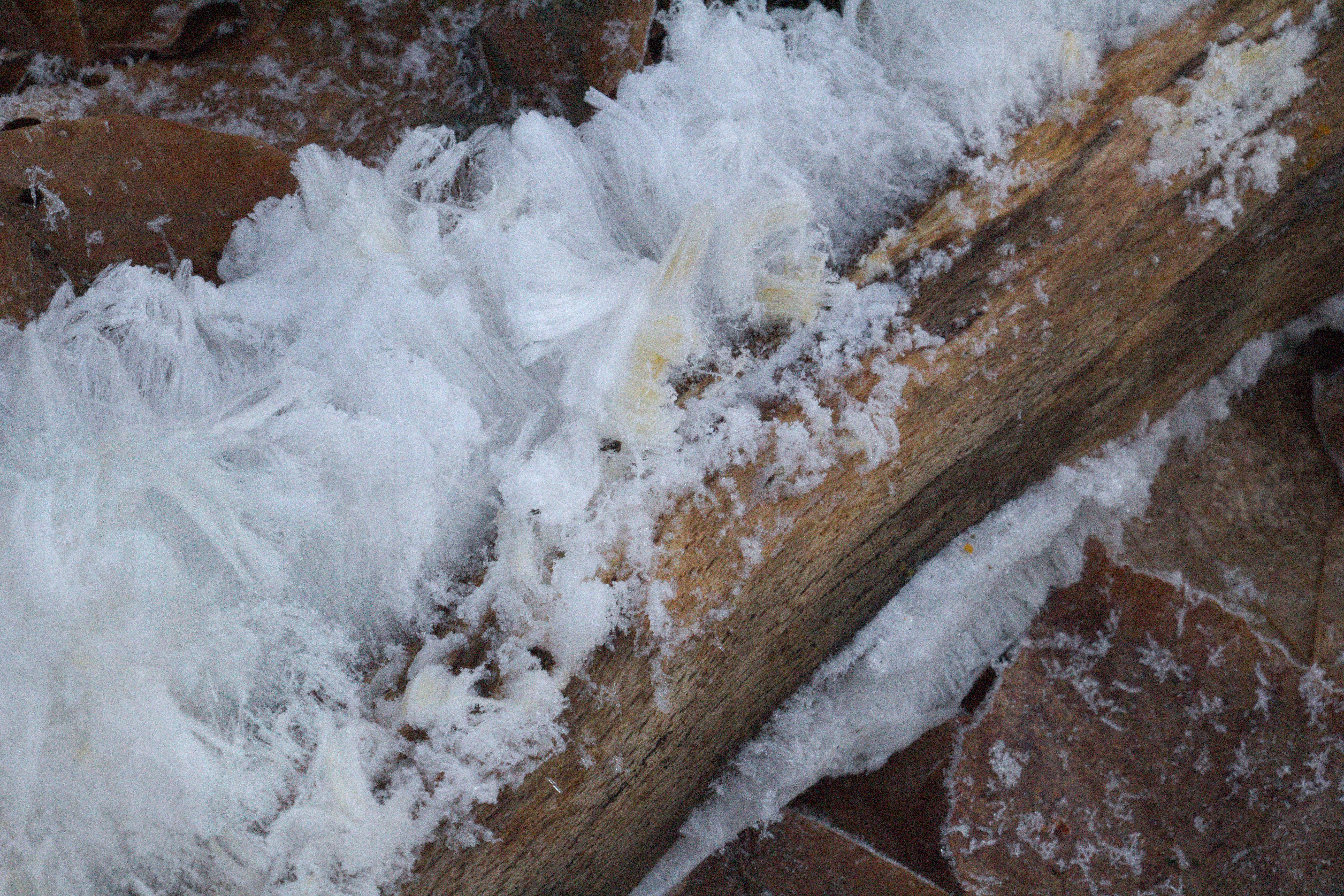 File:Gersfeld Kl Nalle Hairice Wood Fagus b.png - PNG Nalle