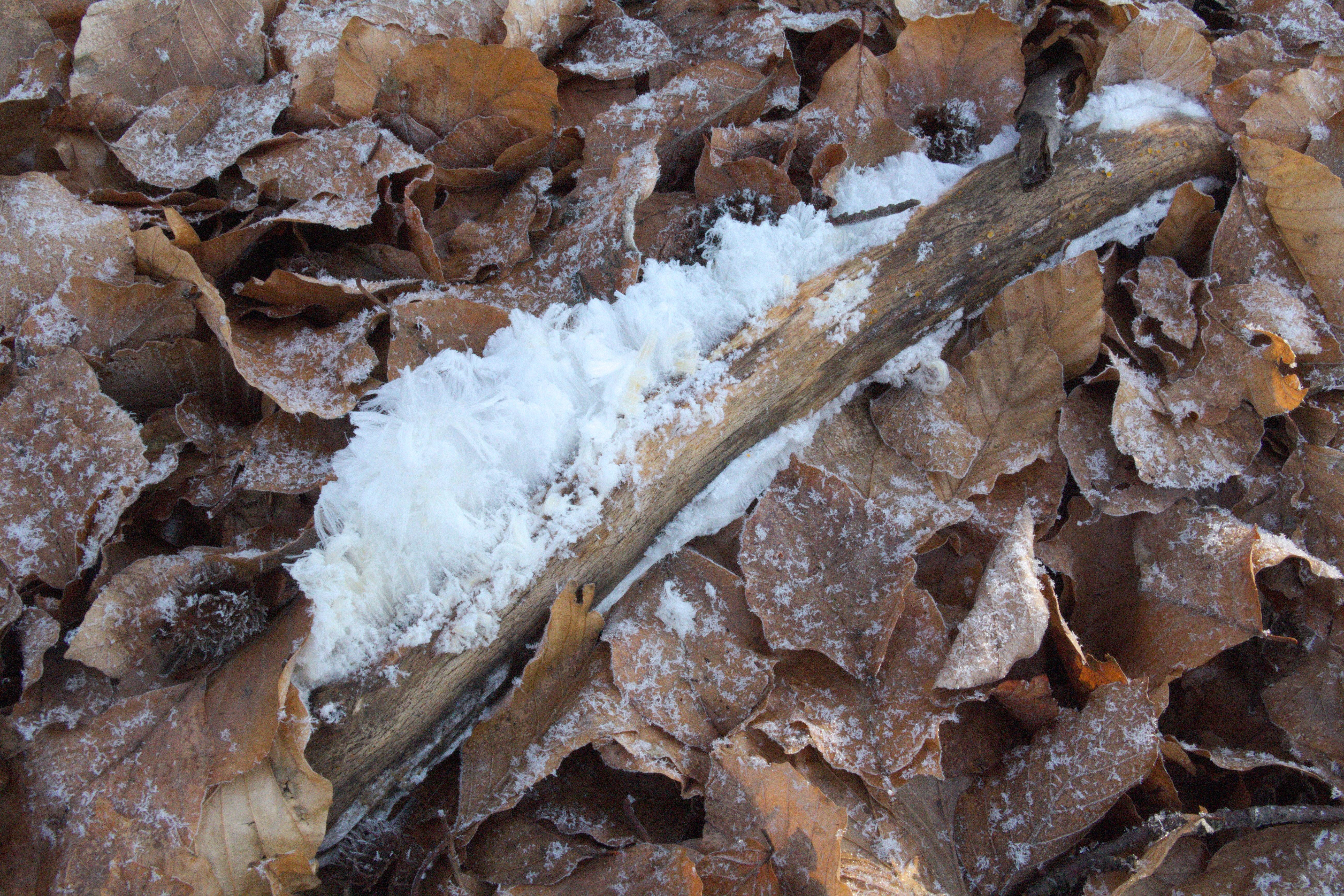 File:Gersfeld Kl Nalle Hairice Wood Fagus.png - PNG Nalle