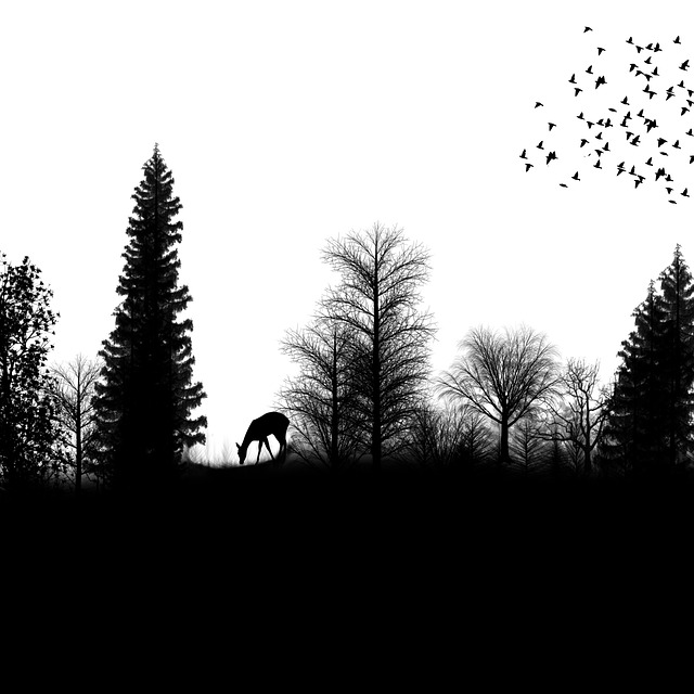 . PlusPng.com landscape, birds, trees, nature, png, deer - PNG Nature Black And White