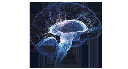 CENTRAL NERVOUS SYSTEM - PNG Nervous System