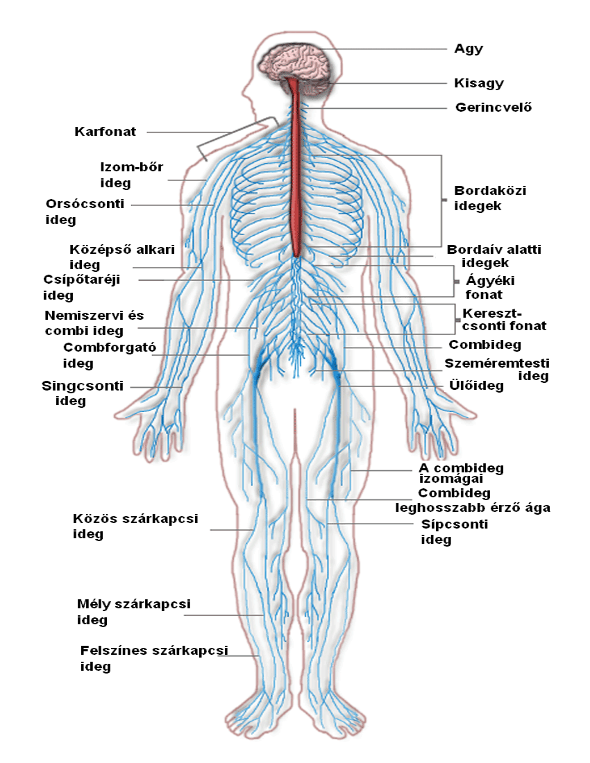 Download pngwebpjpg. - PNG Nervous System