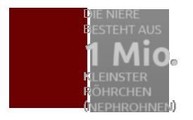 Gesunde Nieren - PNG Niere
