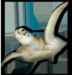 PNG Ocean Animals-PlusPNG.com-239 - PNG Ocean Animals