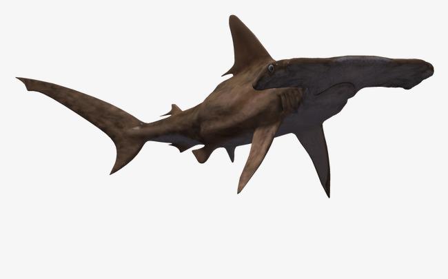Blue Ocean Animals, Ocean Pictures, 3d Fish, 3d Cartoon Free PNG Image - PNG Ocean Animals