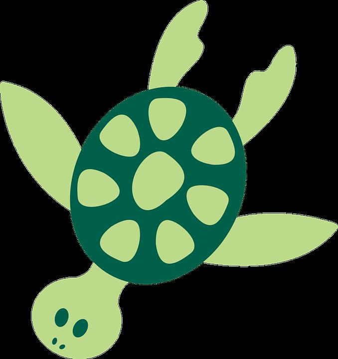 pin Turtle clipart ocean animal #1 - PNG Ocean Animals