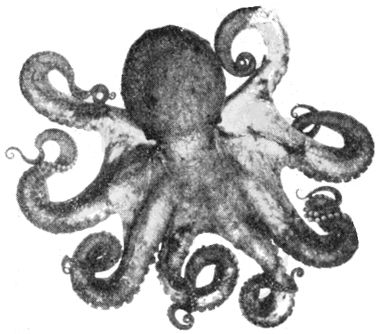 File:PSM V67 D091 Vancouver coast octopus.png - PNG Octopus