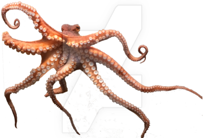 Octopus Png Picture PNG Image - PNG Octopus