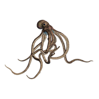 Octopus Transparent PNG Image - PNG Octopus