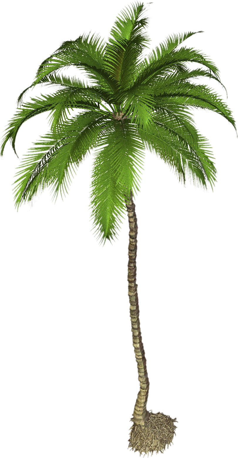 Coconut Tree PNG Photo | PNG Mart - PNG Of A Palm Tree
