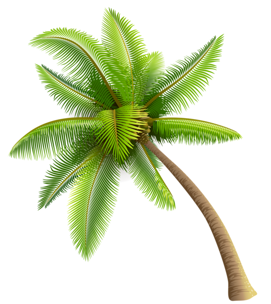Coconut Tree PNG Transparent Image - PNG Of A Palm Tree