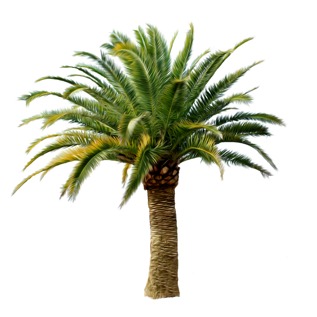 Download - PNG Of A Palm Tree