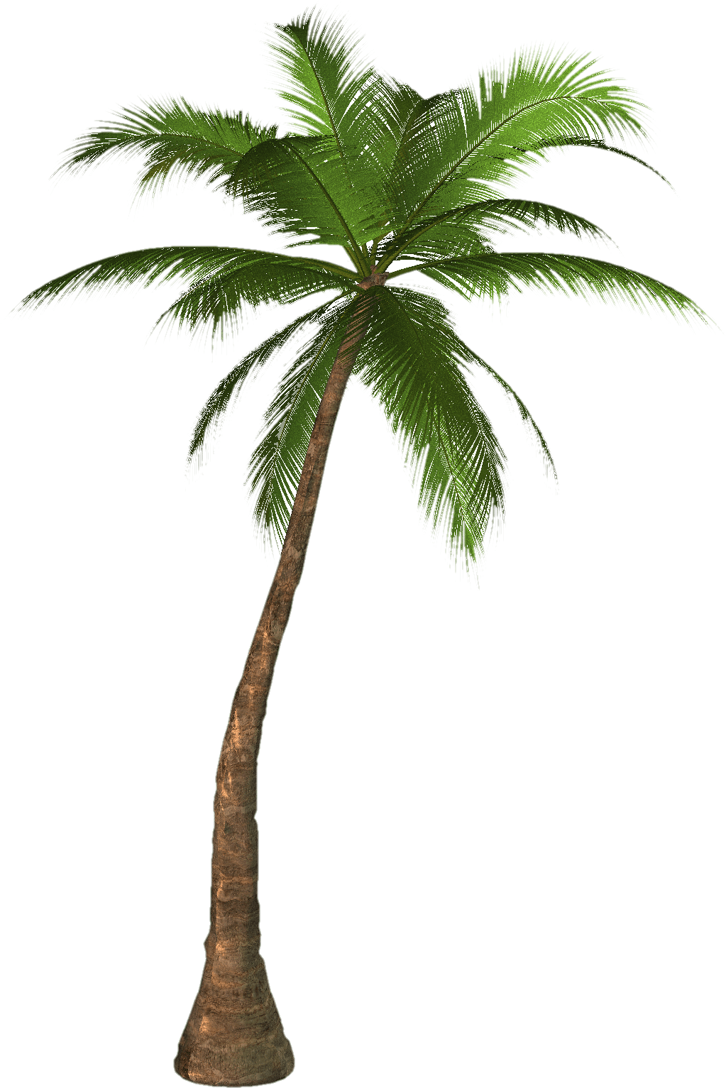 Download PNG image - Palm Tree Png 713 - PNG Of A Palm Tree